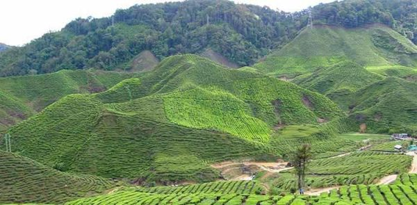 Cameron Highlands Hiking
