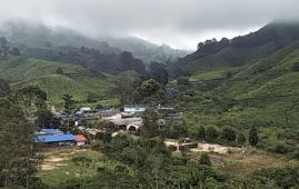 cameron highland tea plantation magical malaysia