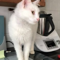 Bertie (homed in March 2017)