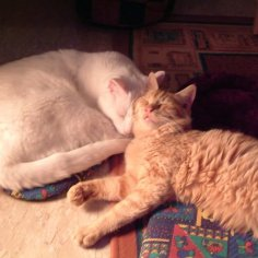 Rusty (homed in 2002) & Newton