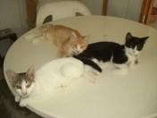 september-kittens-7