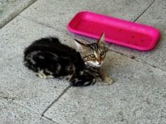 august-2018-kittens-7