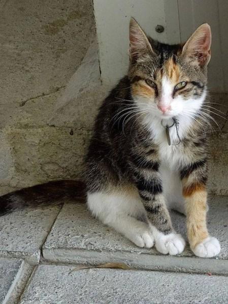 oct-2018-torti-kitten