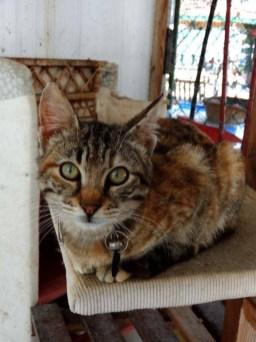 tabby-kitten