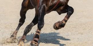 Hest galoperer på ridebane