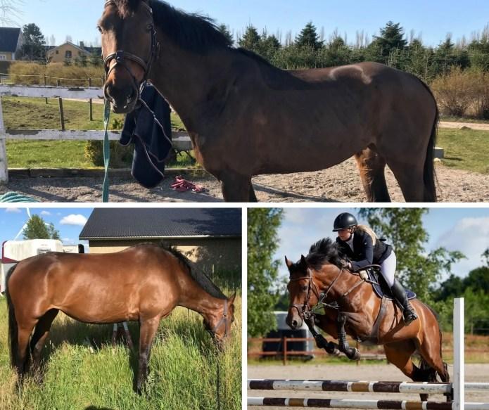 En hest oplevede at få det markent bedre efter at blive tildelt MicroVital fra St. Hippolyt.