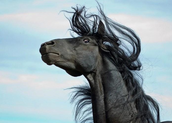 Skræmt og forskrækket hest.