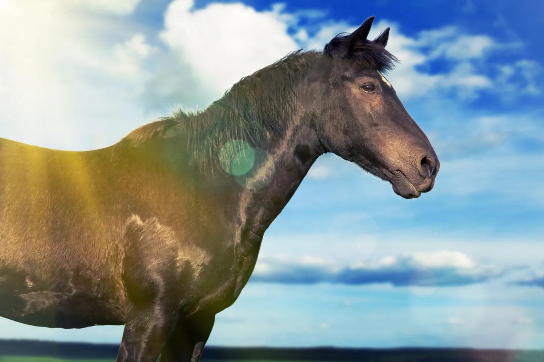 vilde heste