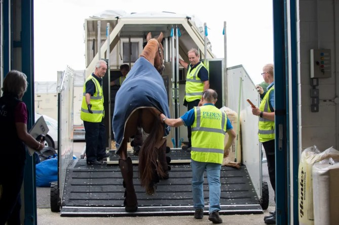 A horse bound for the 2016 Rio Olympic Games is loaded into its stable for the flight - 29 July 2016 -`Pic Jon Stroud