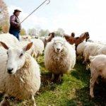 """Mayoría de pastores no disciplina a sus miembros por """"comportamiento pecaminoso"""""""