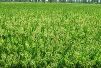 Irrigation au Sahel: 25 millions de dollars US pour aménager et revitaliser 3000 ha