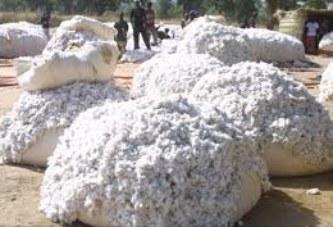 Campagne cotonnière 2019-2020 : Un million de tonnes de coton graine comme objectif