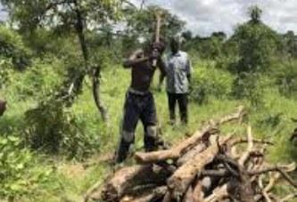 Exploitation des produits forestiers non ligneux au Mali : Une étude d'impact sur les redevances perçues, validée