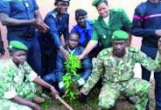 Lutte contre la désertification : 300 pieds d'arbre plantés par l'AAN