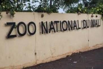 ZOO-MALI : L'irresponsabilité des dirigeants avérée