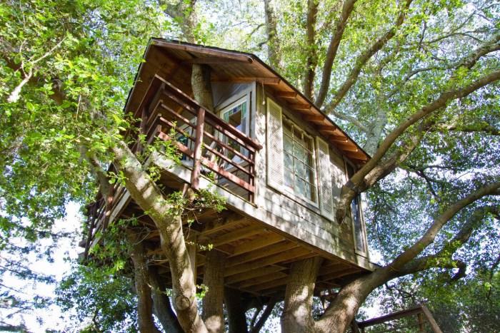 Persiapan Untuk Rumah Pohon