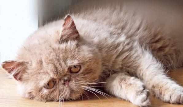 Ciri-Ciri Kucing Stress