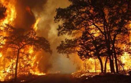 Akibat Dari Kebakaran Hutan