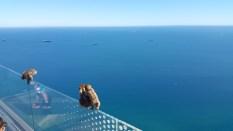 Affen auf dem Skywalk