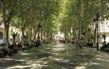 Es grünt so grün in Palma de Mallorca