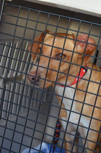Fliegende Hunde   Mallorca <> Deutschland   Ein Nachmittag bei AJUCAN Mallorca Hundehilfe