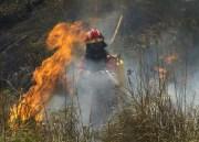 Das Feuer von S'Albufera ist immer noch aktiv: Bisher 300 Hektar verbrannter Naturpark