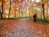 Der Oktober läutet den Herbst ein