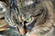 Das Ajuntament in Inca regelt die städtischen Katzenkolonien