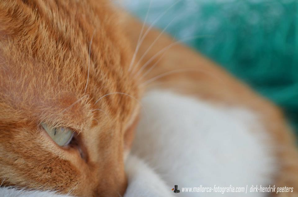 Wilde Katzen auf Mallorca