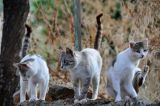 Wilde Katzen – sterile Katzen