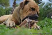 Menschen können Covid-19 auf Hunde, Katzen und Frettchen übertragen