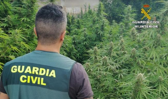 Guardia Civil hebt Marihuana-Plantagen aus