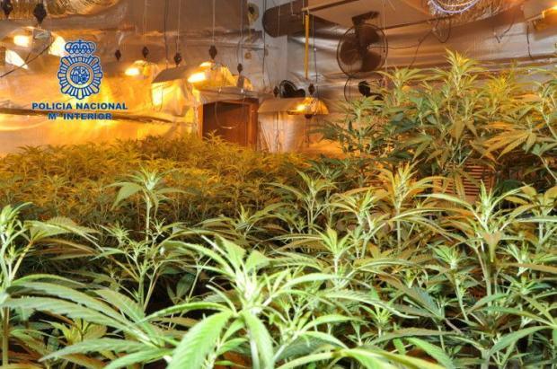MarihuanaPlantage