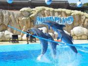 Unternehmen für touristische Aktivitäten auf Mallorca öffnen ihre Türen erst im Mai