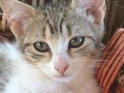 Katzen übernehmen Palma de Mallorca?