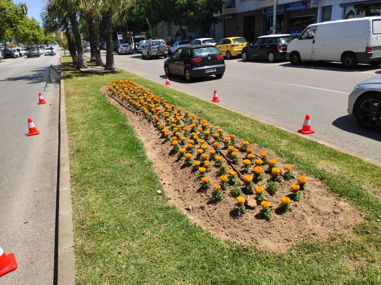 Palma pflanzt wieder Blumen