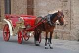 Kutsch-Pferde leider unter den hohen Temperaturen