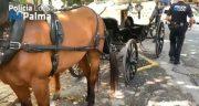 """Vorwurf gegen """"Missbrauch und Ausbeutung der Kutschpferde in Palma"""""""