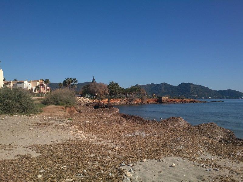 Port Roig