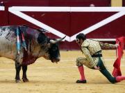 Palma de Mallorca wird Stierkampffrei
