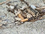 Gemeinde Santanyi will Müllsünder hart bestrafen