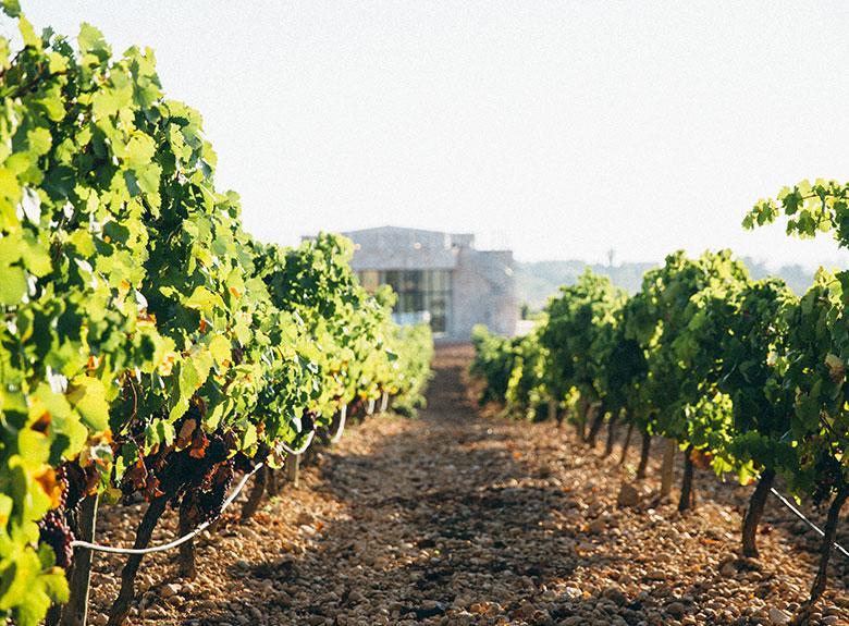 Weinbau auf Mallorca