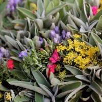 Fumeri - Pep und seine Pflanzen