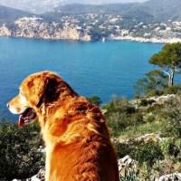 Mallorca Hunde-Wanderung