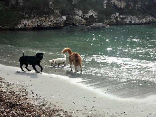 Eine Hundewanderung an den Strand von Cala Pi auf Mallorca