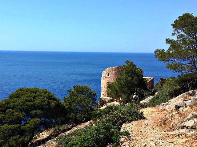 Mallorca Hunde auf Wanderschaft