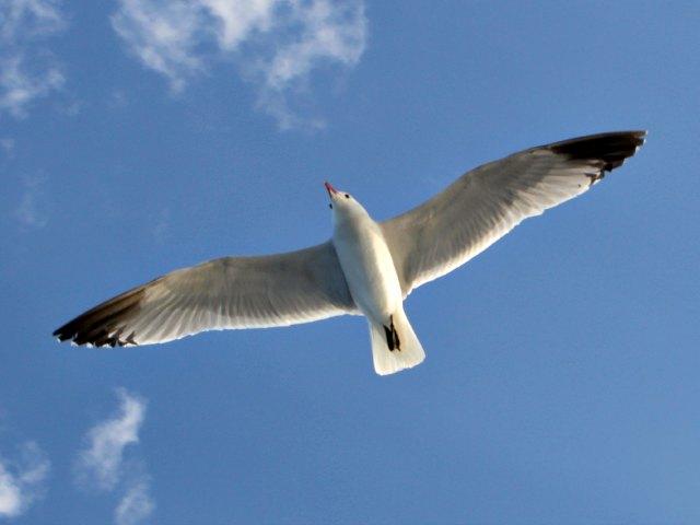 Mund geschlossen halten beim Birdwatching