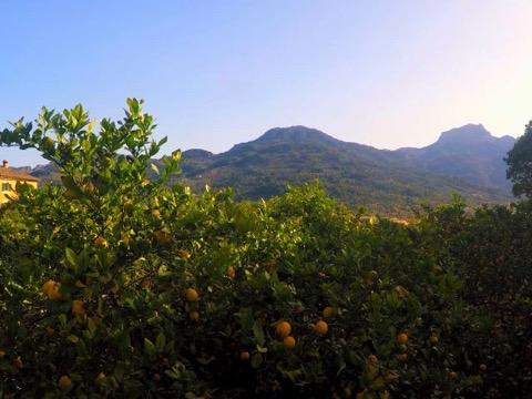 Orangenplantagen nahe Sóller