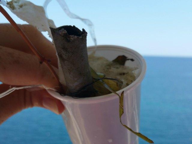 Mallorca und Meer - traurige Realität