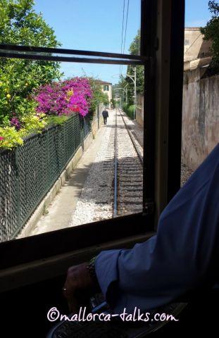 Blumen an der Bahnstrecke